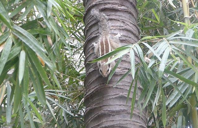 scoiattolo al giardino dei sogni
