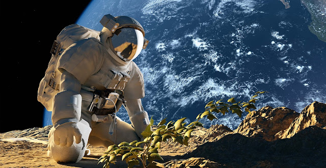 Plants that secreted high levels of strigolactone were able to thrive in the low-nutrient soil despite the microgravity conditions. (Image: istock.com/1971yes)