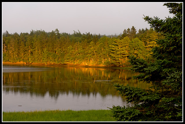 Nova Scotia; Maritimes; Inlet; Evergreens