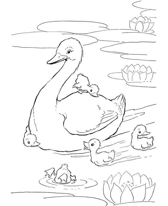Tranh tô màu vịt mẹ và vịt con trong hồ nước