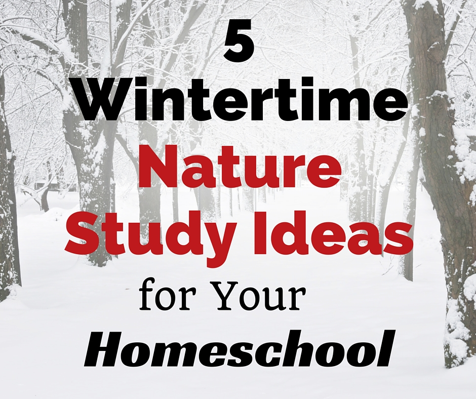 5 Wintertime Nature Study Ideas for Your Homeschool