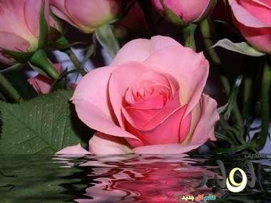 صور زهور طبيعية جميلة ملونة