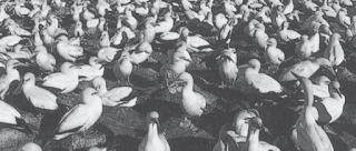 Populasi burung