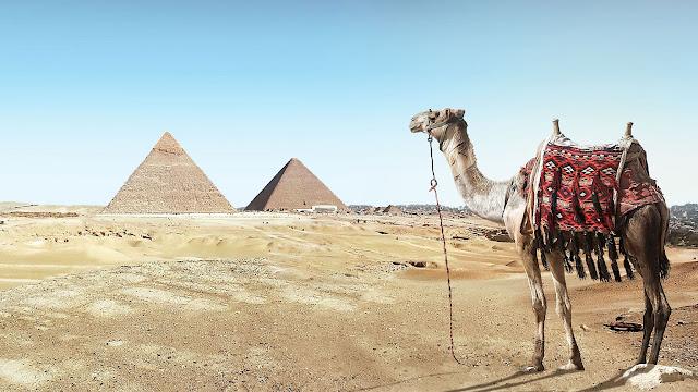 Pyramides en Egypte dans le desert avec chameau