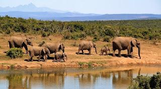 Mengenal Ciri Benua Afrika