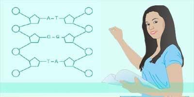 Contoh Soal UN tentang Substansi Genetika Beserta ...