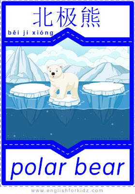 Polar bear - English-Chinese flashcards for wild animals topic