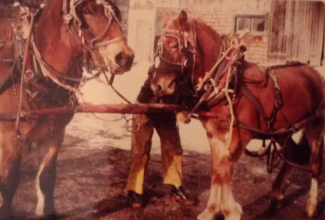 draft horses, on our farm, in the 70's