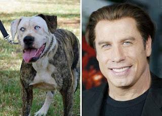 los dobles de los famosos - humor - John Travolta