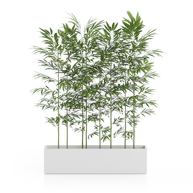 3D model free -  Plants_27