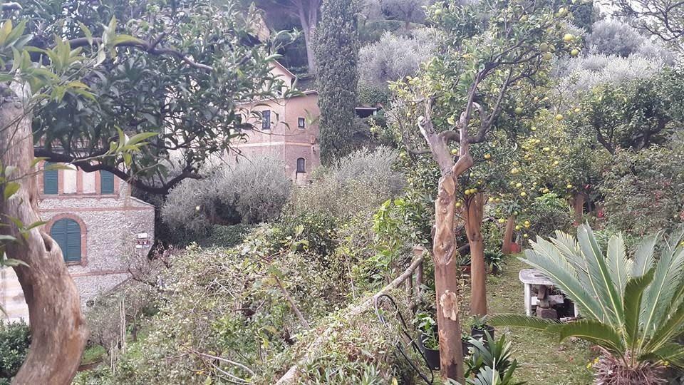 oliveira toscana