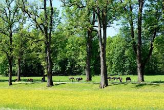 Woww Mengejudkan! Tonton Video Bergambar Pohon-pohon, Stres Dapat Menyusut Sampai 3x Lipat