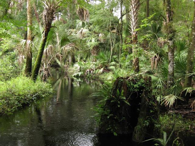 Tosohatchee State Reserve em Orlando