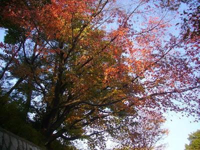 寝屋川公園 紅葉ウォーキング