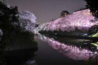 Tokyo City - Sakura