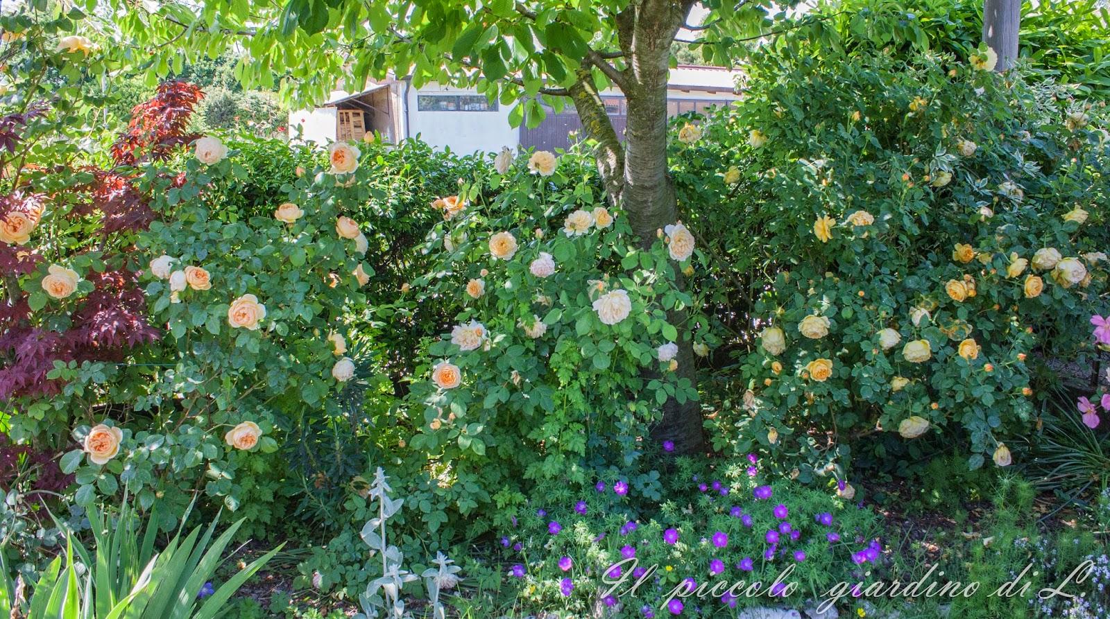 Il piccolo giardino di L Una visione dinsieme del mio