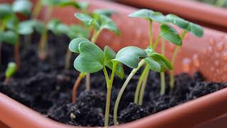 É possível ter uma horta até no parapeito da janela, enfileirando vasinhos com ervas e temperos usando as técnicas de cultivo orgânico – que envolvem o uso responsável do solo