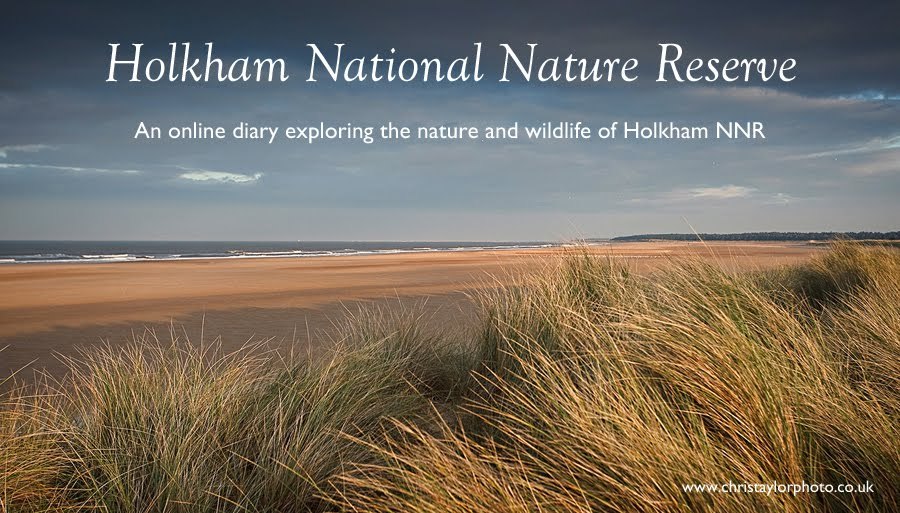 Holkham National Nature Reserve