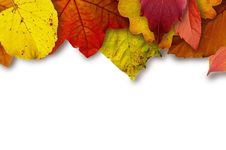 Beautiful Colorful Leaves On Top