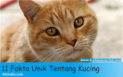 Fakta unik kucing