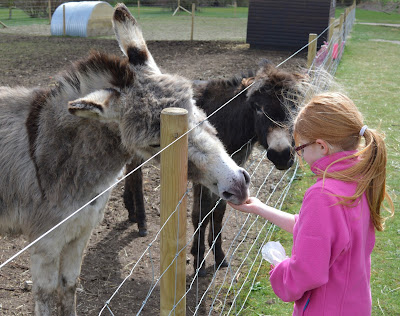 Tattershall Farm Park - A review - feeding a donkey