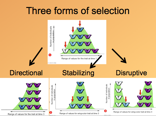 Is Artificial Selection A Good Model For Natural Selection