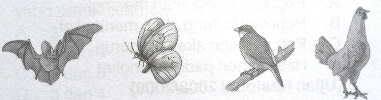 CINTA BIOLOGI: HUBUNGAN KEKERABATAN MAKHLUK HIDUP