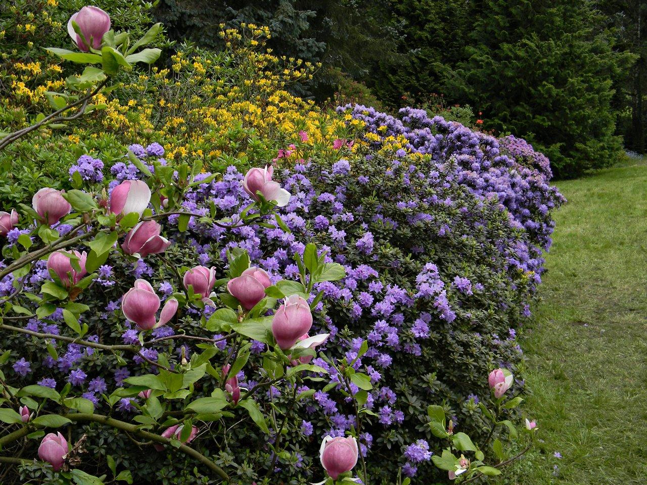 arboretum w Kórniku, krzewy, kwiaty, ekspozycje