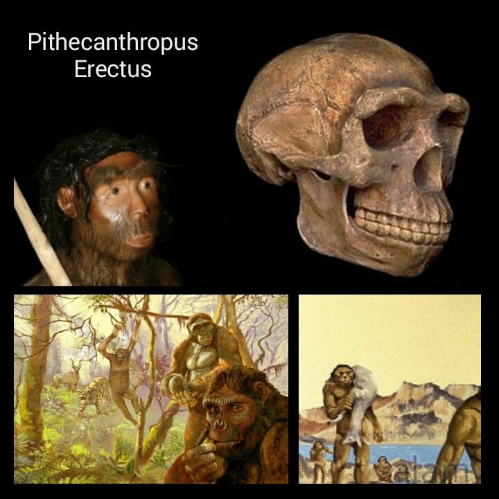 Ciri Ciri Pithecanthropus Erectus Zona Penemuan