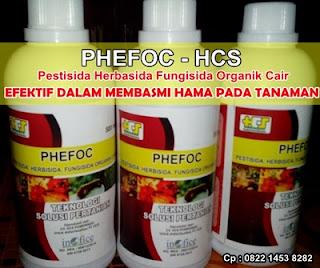 Phefoc - Cara Membasmi Hama Wereng Pada Semua Tanaman