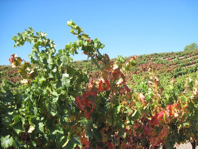 Croad Vineyard at Harvest Time, ©B. Radisavljevic, 2011