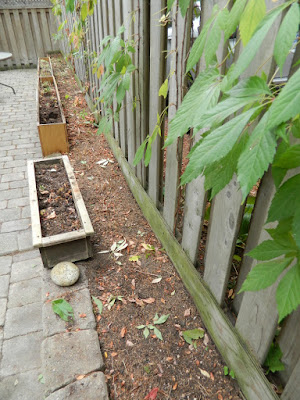 Fall Clean up Toronto Bedford Park Backyard Garden after by Paul Jung Gardening Services