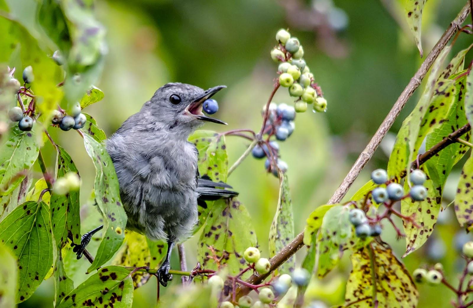spring bird on a - photo #12