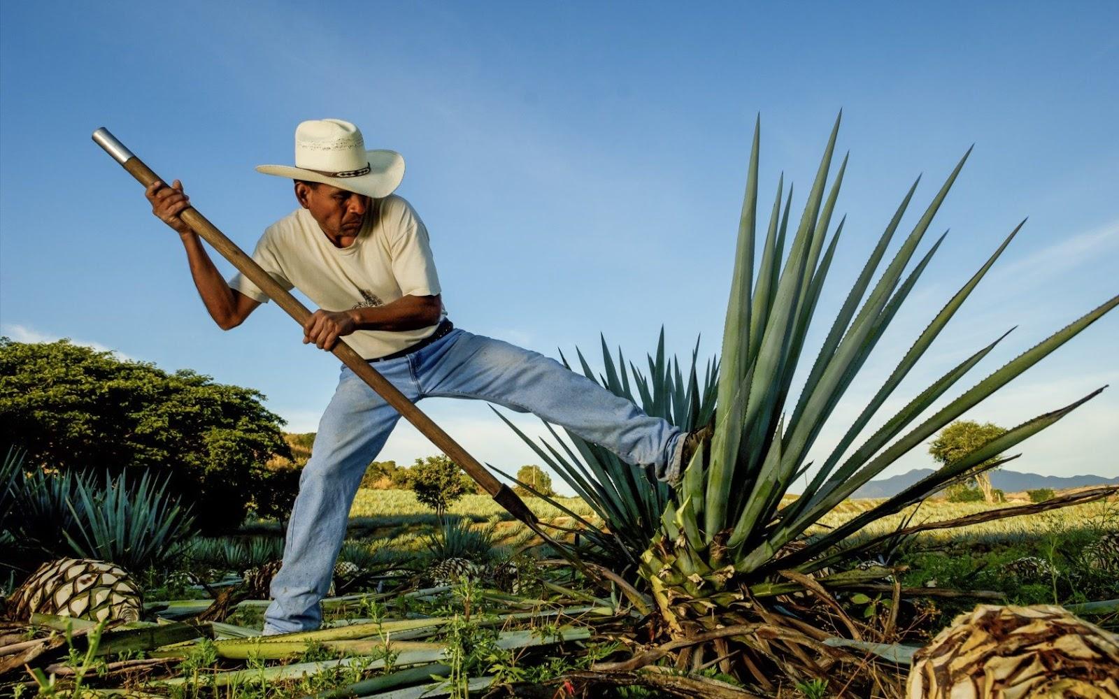 Oaxaca: mezcal, sabor y cultura   viajaBonito