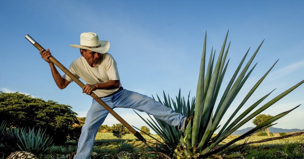 Oaxaca: mezcal, sabor y cultura | viajaBonito