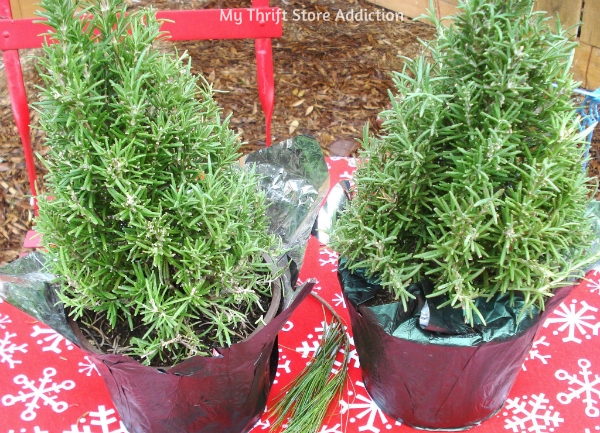 Christmas clearance rosemary