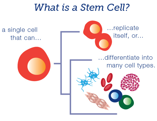 Stem cell treatment knees Malaysia
