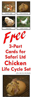 FREE 3-Part Cards for Safari Ltd Chicken Life Cycle Set from In Our Pond