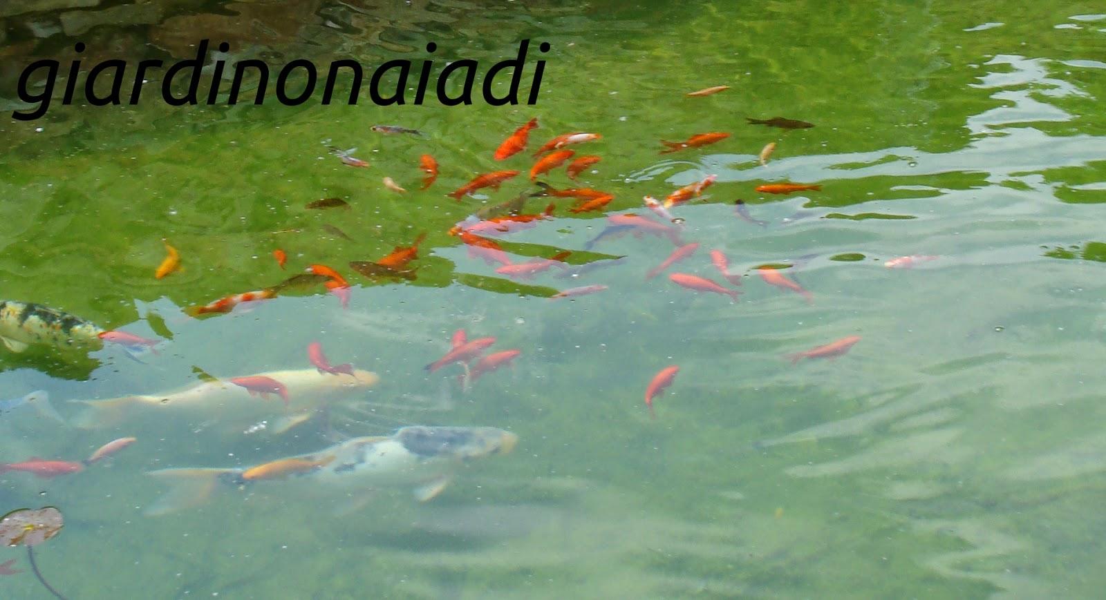 Il giardino delle naiadi aprile pulizie nel laghetto for Acqua verde laghetto
