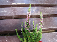 ヘザーフラワーの花