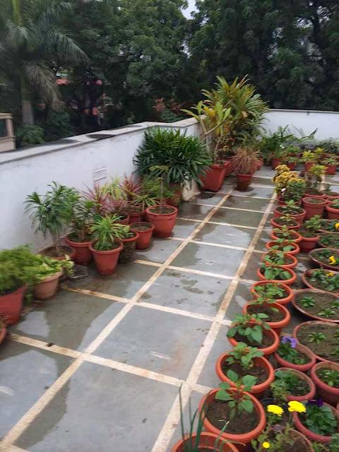 Dhara...The Earth...An Indian gardening blog