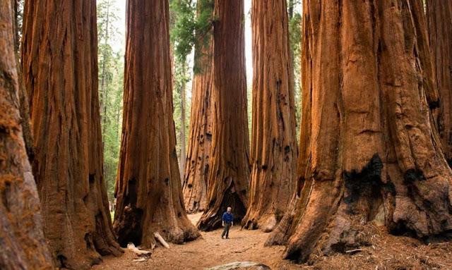 Sobre o Parque Nacional da Sequoia na Califórnia