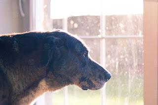 Огромный пес фото