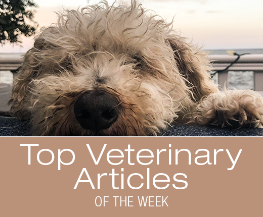 Top Veterinary Articles of the Week: Gastroenteritis, When to Bring Your Dog to the ER, and more ...
