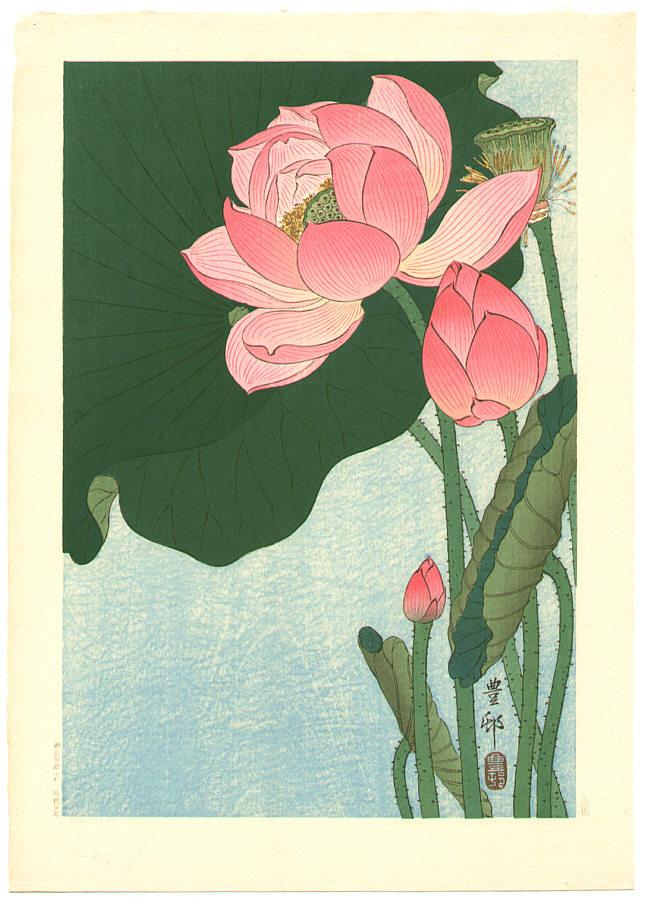 Lotus flower mightylinksfo