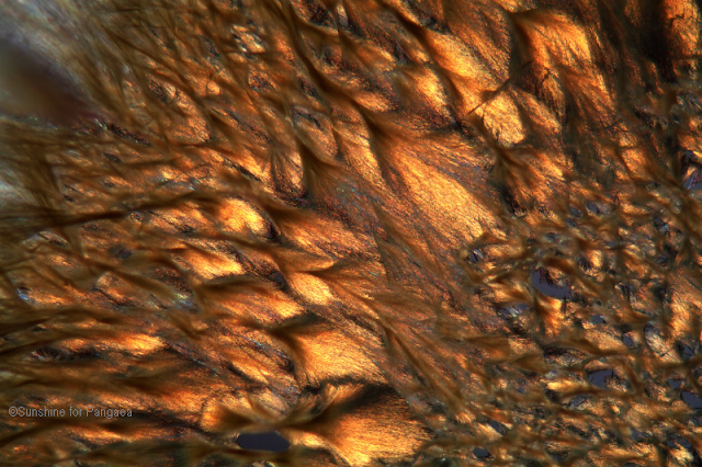Aloin under the microscope