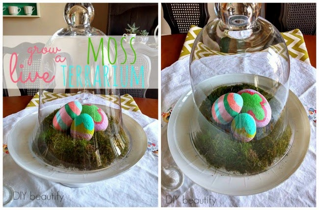 Grow a Live Moss Terrarium - Decorating for Spring www.diybeautify.com