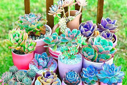 Stunning Succulent Collections That Will Make You Want Them