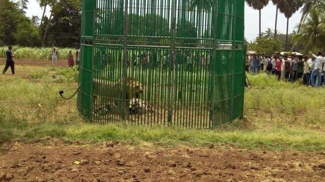 India arrests 18 lions, puts them on trial over killing of three people