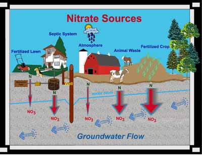 Sources of nitrate in groundwater